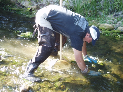 David Thomas scrubbing rocks during bioassessment monitoring along the Ventura River (Sep. 2005)